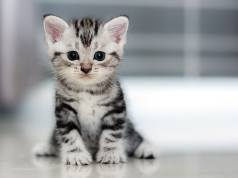 Adorable Pets for Kids