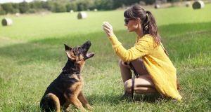 German Shepherd Trainable Family Dog Breeds