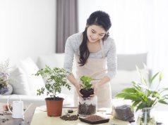 Health Benefits of Houseplants