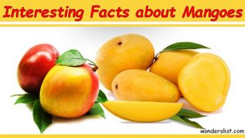 Interesting Facts about Mangoes