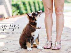 ways to puppy proof your home