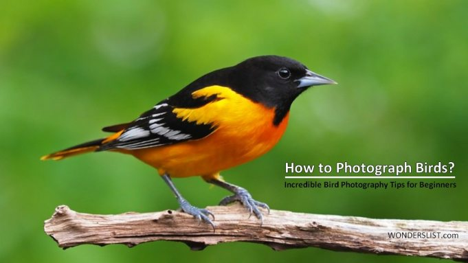 How to Photograph Birds