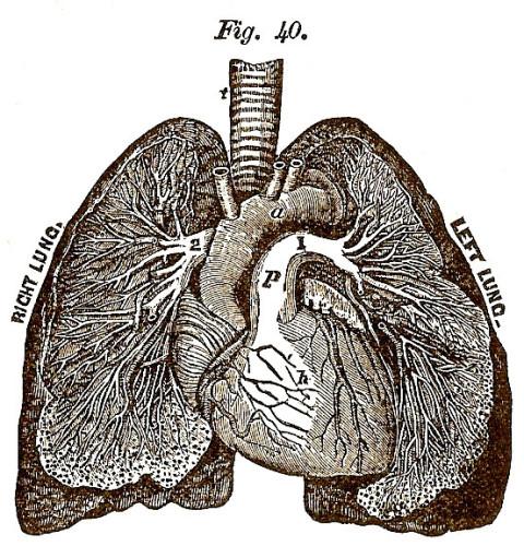 Heart - CSMA