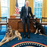 Joe Biden, dogs Champ, Major