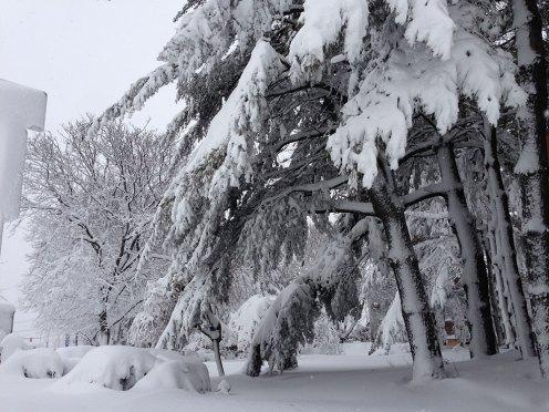 blizzard-1-013