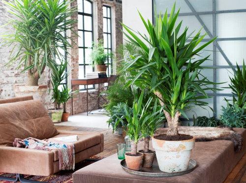 Welke planten geven mijn interieur de gewenste look in 2017?