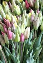 tulip bouquet_2