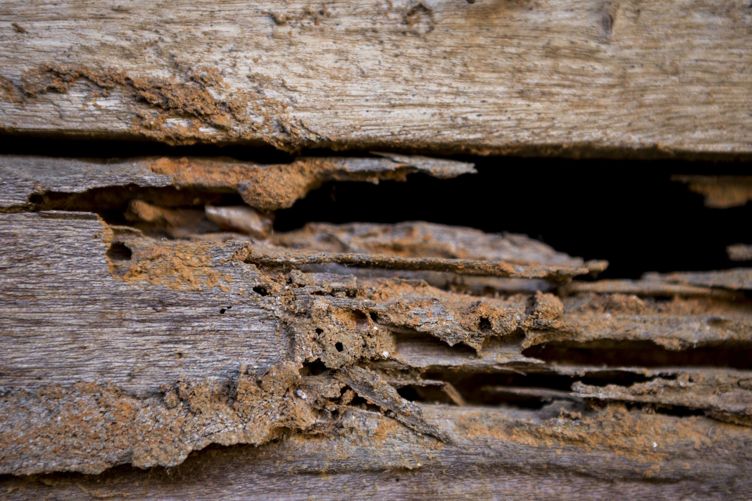 Wood Floors And Termites Woodfloordoctor Com