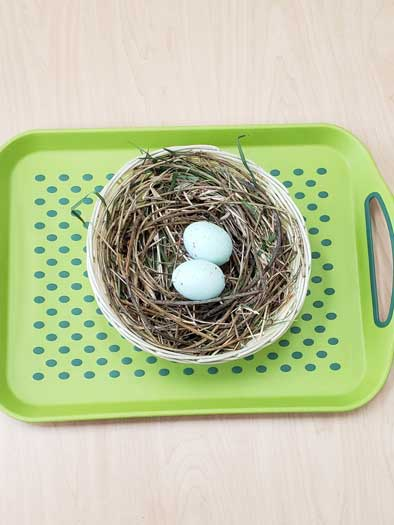A bright green tray holds a basket with a birds nest made from twigs, with two blue eggs inside/=.