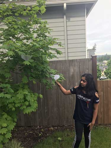 A girl touches a paper heart in a vine maple tree