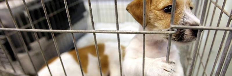 Adopt A Dog or Cat on Saturday, February 23rd