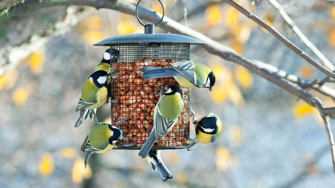Feeding Wild Birds What How When And Why Woodland Trust