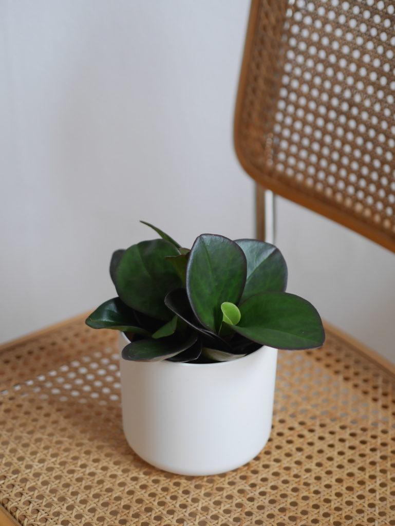 conseils-entretien-plantes-vertes-blog-lifestyle-strasbourg-woodmoodfood