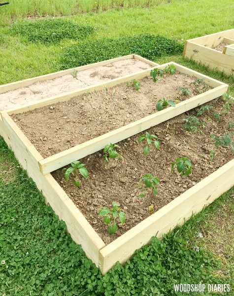 How to Build a DIY Raised Garden Bed