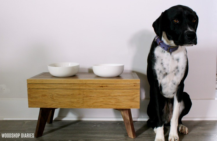 Lucy posing next to her DIY Modern Elevated Dog Food Bowl Stand