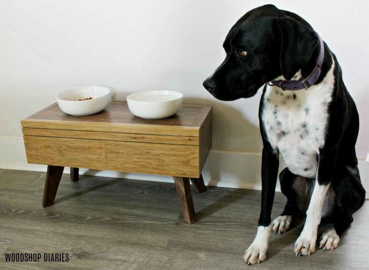 Lucy posing next to modern elevated food bowl stand