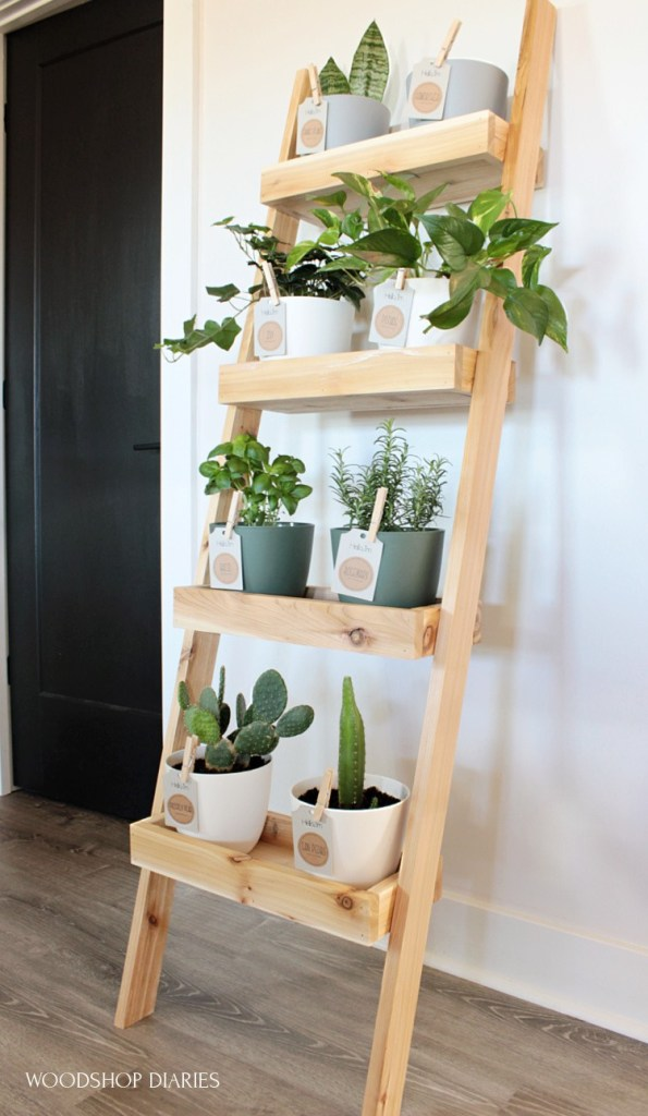 DIY plant ladder shelf finished and leaning against the wall with plants on each shelf