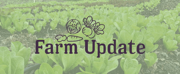 Farm Update: May 15th