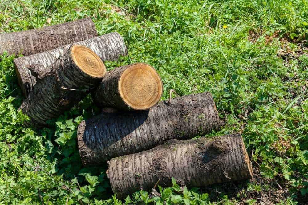 Cherry Firewood