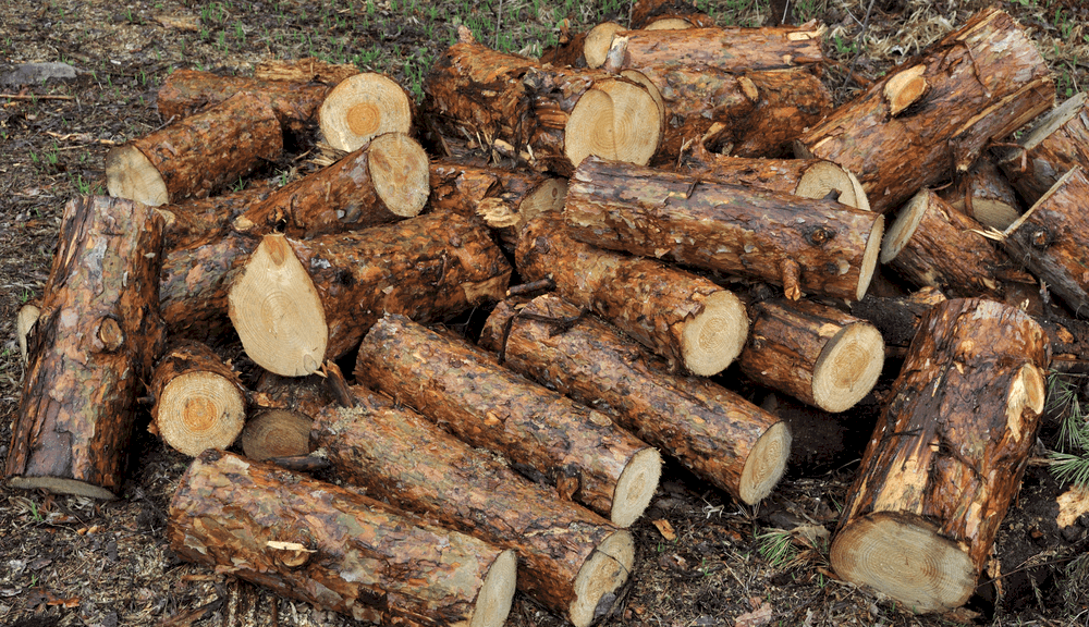 How To Dry Wet Firewood
