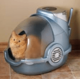 Garfield cat inside litter box