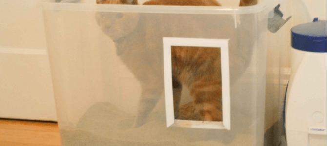 Best automatic litter box for cats
