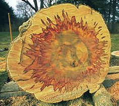 boxelder for woodturning