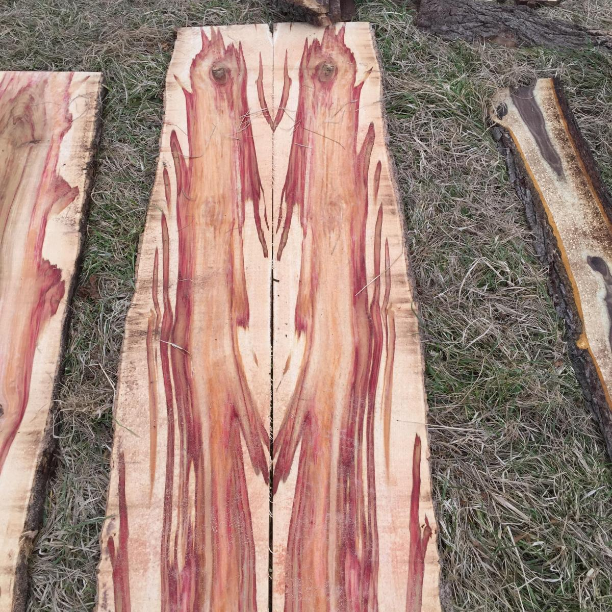 Turning BoxElder and Sawmilling Boxelder Beautiful Wood with Red and Blue Veins