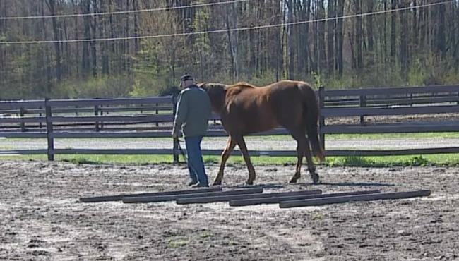 chuck stefanich with horse 050716_212336