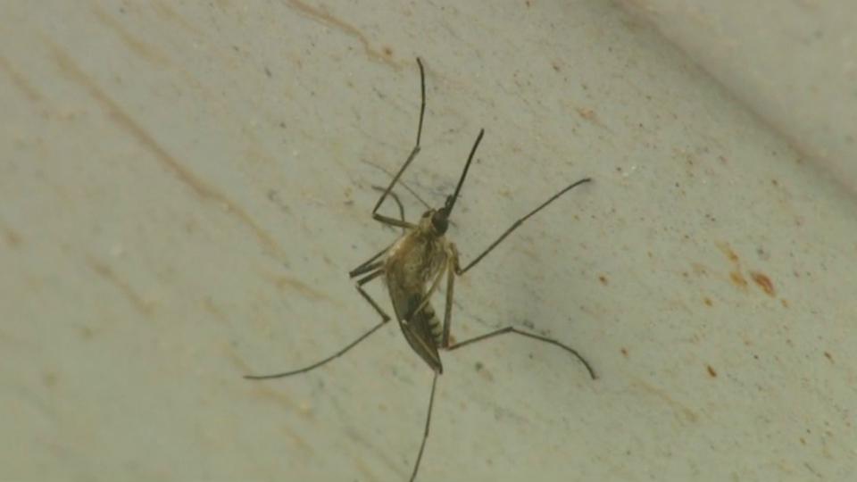 generic mosquito_1535405303461.jpg.jpg