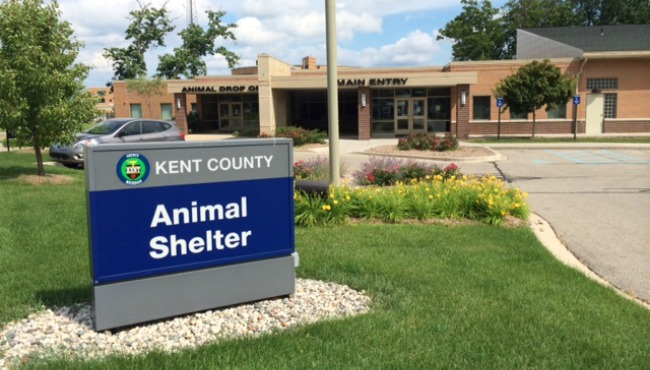 generic kent county animal shelter summer_1523413296822.JPG.jpg
