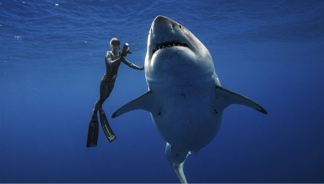 Great White Shark Sighting 011819_1547829207777.jpg.jpg