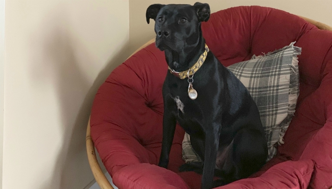 To celebrate National Dog Day, News 8 staffers shared photos of their canines. Above is a photo of Assignment Manager Amy Brodrick's dog, Riley, who is a mix of Staffordshire Terrier and labrador retriever.