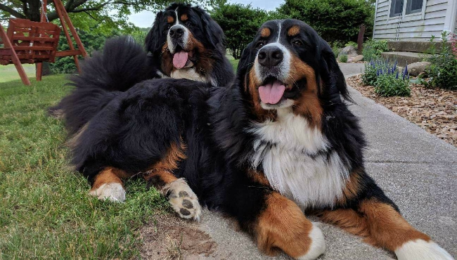 To celebrate National Dog Day, News 8 staffers shared photos of their canines. Above is a photo of Meteorologist Emily Schuitema's dogs, Franklin and Minnie.