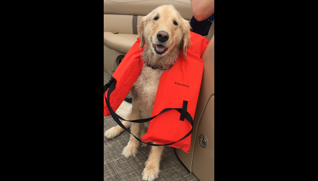 To celebrate National Dog Day, News 8 staffers shared photos of their canines. Above is a photo of Reporter Joe LaFurgey's dog, Kauai. The LaFurgey family named her after one of the Hawaiian Islands after they took a vacation and fell in love with the place. Kauai is a golden retriever who loves the water.