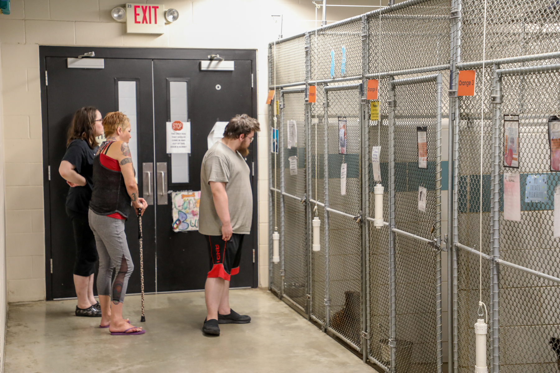 Many fur babies found their forever homes at the Clear the Shelters event on Aug. 17, 2019. (Michael Buck/WOOD TV8)