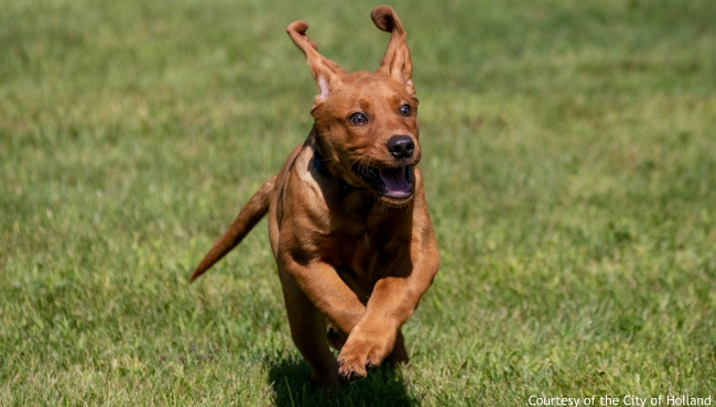 A photo of a dog running. Courtesy of the City of Holland.