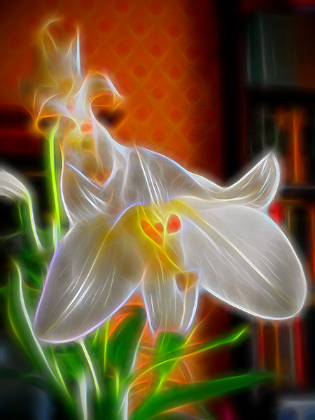 Glowing Lily, by Andrew Brandt, http://www.woodwind5.com/