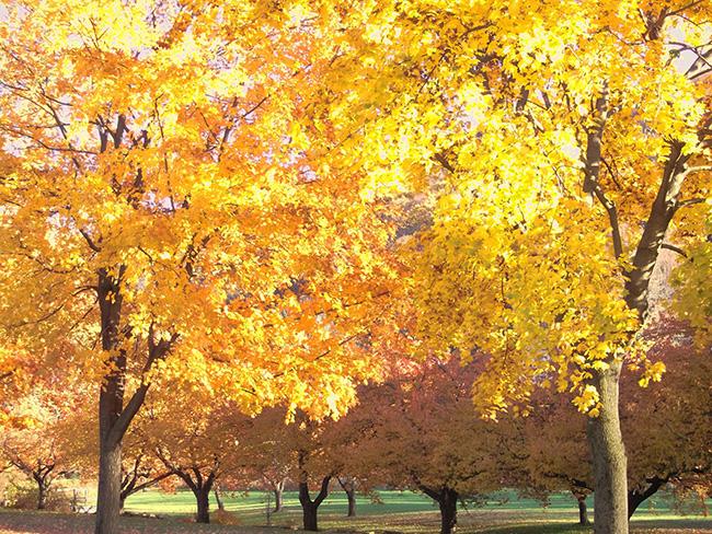 Hurd Park in Fall