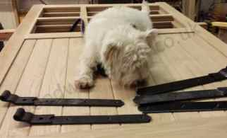 A Westie with some gate hinges