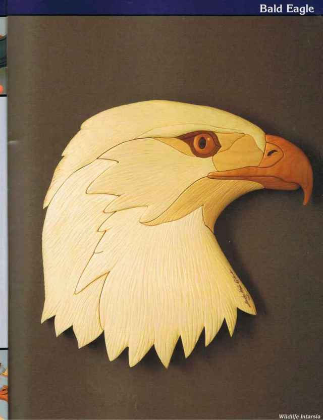 Bald Eagle Demonstration - Wildlife Intarsia - Woodworking Archive
