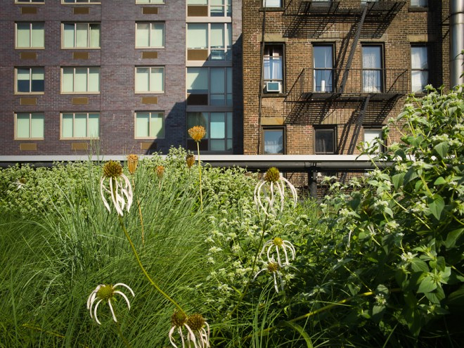 High Line perennials