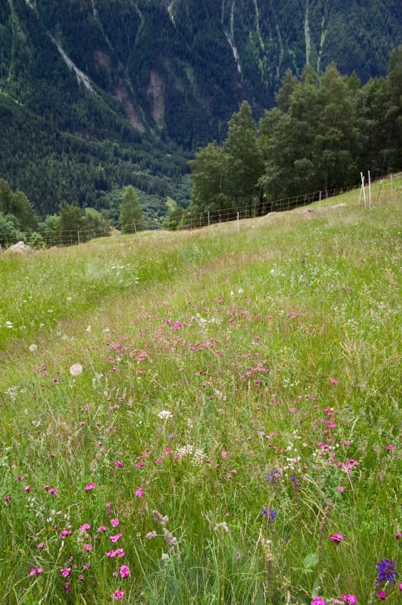 Wild flowers redux
