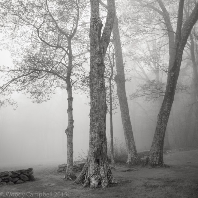 fogFOG