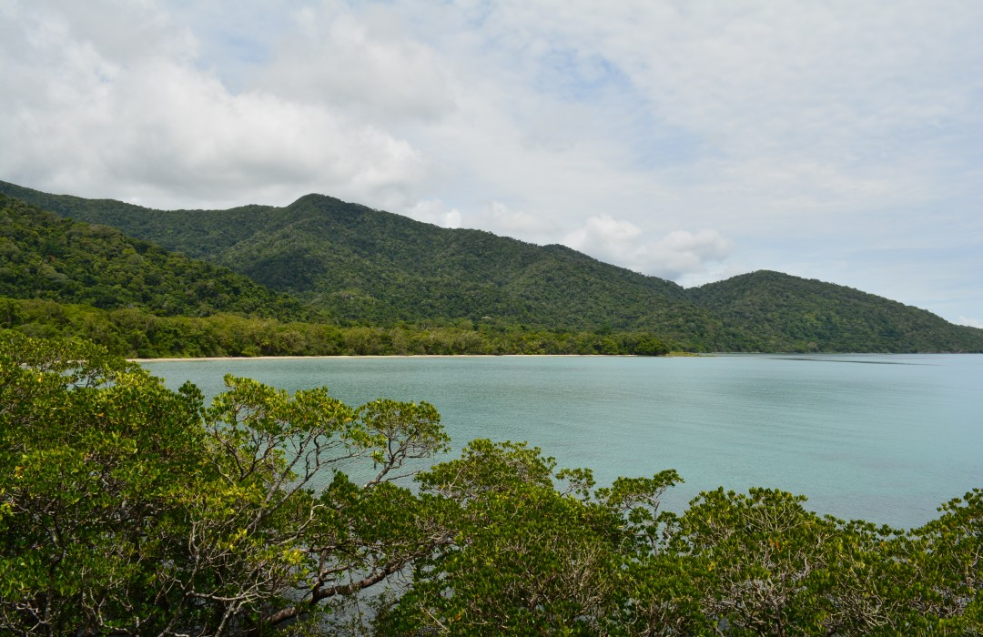 Travel Guide | Daintree National Park | Where Rainforest meets the Reef
