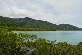 www.woodyworldpacker.com Australia Queensland Daintree Rainforest National Park