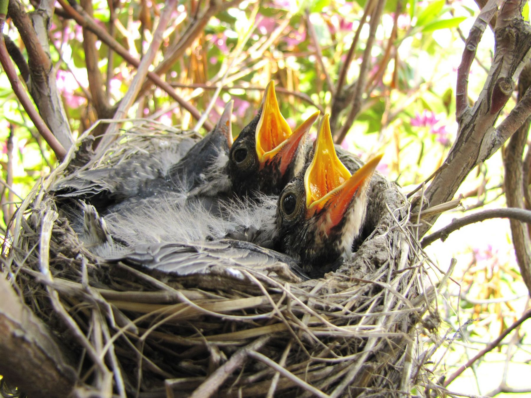 Spring S Baby Animals Are Easy Prey For Outdoor Pets