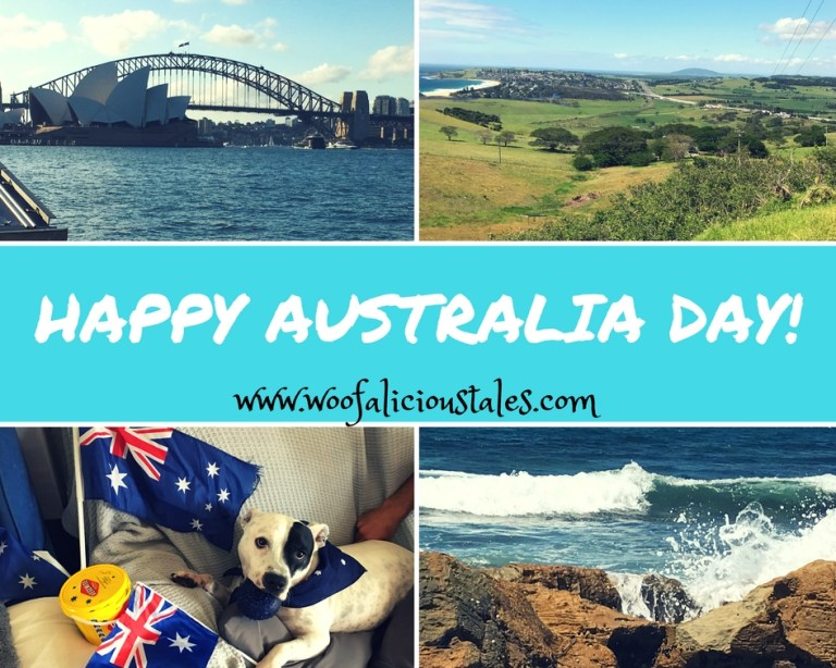 photo collage Sydney harbour, south coast, dog with Australia Day flag and beach