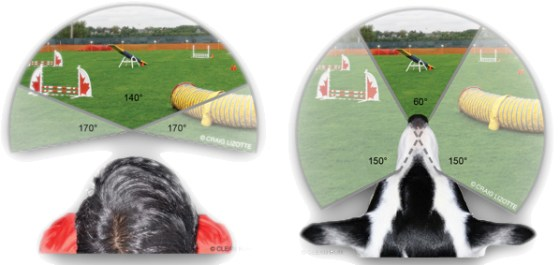 picture comparing dog field of vision and human vision