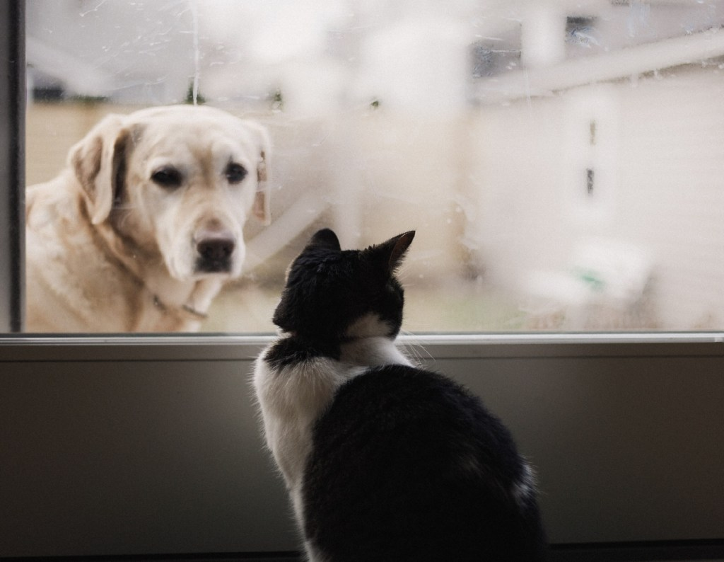 Introducing a New Dog to Your Resident Cat